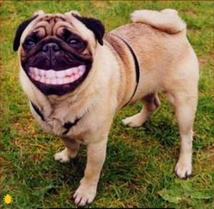 Huge-grin